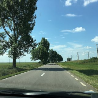 Brasov tree lined roads